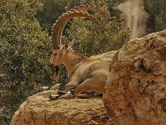 14 сентября. Библейский зоопарк в Иерусалиме