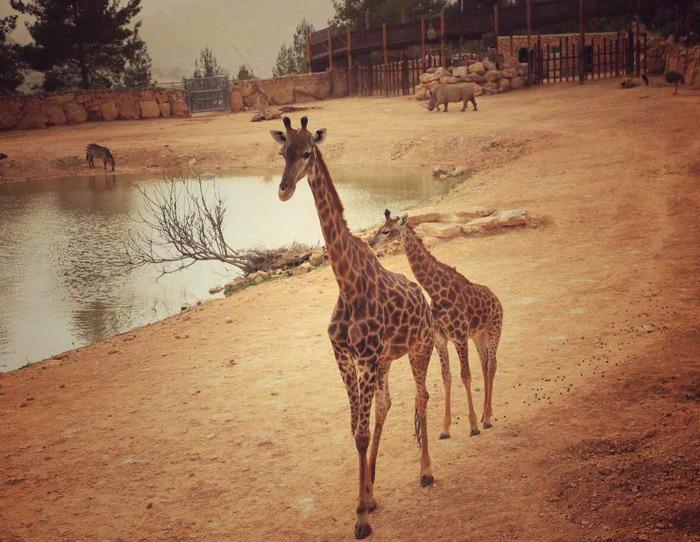 exc_safari